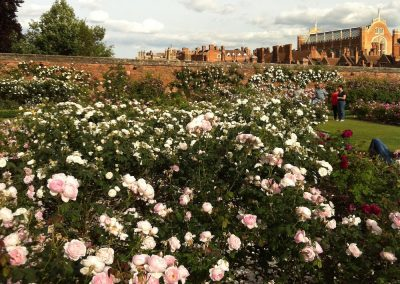 Hampton Court Palace Gardens Rose Gardens