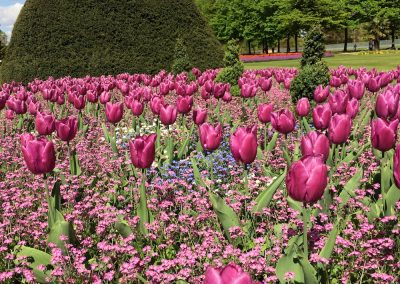 Hampton Court Palace Tulip Garden